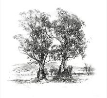 Two trees by Jan Pudney