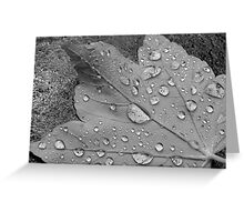 Rain Droplets Greeting Card