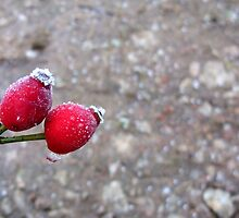 It Was 'Berry' Cold by Fay Freshwater