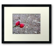 It Was 'Berry' Cold Framed Print
