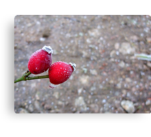 It Was 'Berry' Cold Canvas Print