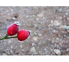 It Was 'Berry' Cold Photographic Print