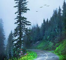 Into the Fog by Svetlana Sewell