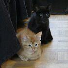my new little friends by ienemien