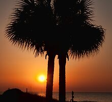 Palmetto Sunset by PaulWilkinson
