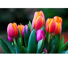 Colorful tulips Photographic Print