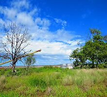 Cotton Farm by janewiebenga