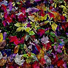Quebec Autumn Leaves Abstract by Dana Roper