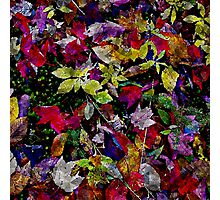 Quebec Autumn Leaves Abstract Photographic Print