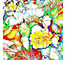 Yellow Begonias with Leaves Photographic Print