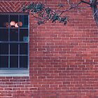 Tree with window by Benjamin Abercrombie