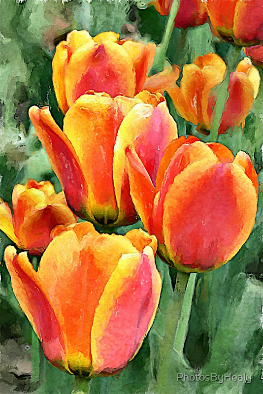 Orange tulips watercolour by PhotosByHealy