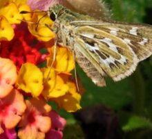 Skipper Butterfly #1 Sticker