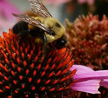 Buffet For a Bee by ColdPhotographs