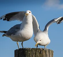 Gulls Friendship by JonnisArt
