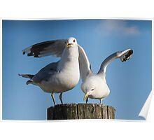 Gulls Friendship Poster