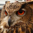 Brown Owl by Vicki Spindler (VHS Photography)