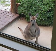 Taking a look through the big front window! Young Joey. 'Arilka'.  by Rita Blom
