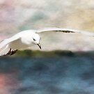Seagull in flight 0078 by kevin chippindall