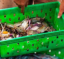 Crabs in the green plastic box on the fish market by Stanciuc