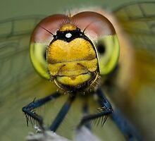 I am looking at you! by JBlaminsky