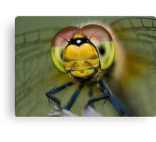 I am looking at you! Canvas Print