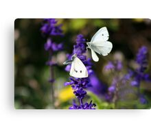 Cabbage Whites II Canvas Print