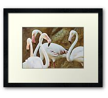 Wild Pink Flamingo Birds In Nature Framed Print