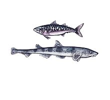 Double Fish Photographic Print