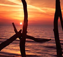 Colorful red sunset behind driftwood sculpture art photo print by ArtNudePhotos