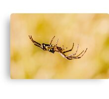 Out on a Web Canvas Print