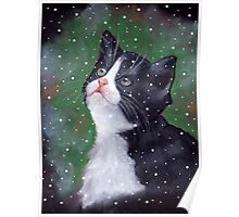 Tuxedo Kitten Looking Up at Falling Snowflakes Poster