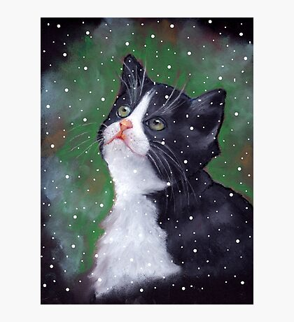 Tuxedo Kitten Looking Up at Falling Snowflakes Photographic Print