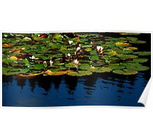 The Waterlily Lake......... Poster