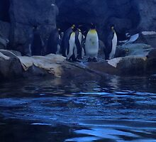 Penguin Plunge by Lauren Jacobson
