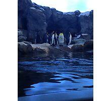 Penguin Plunge Photographic Print