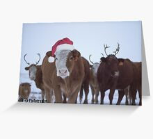A Mooey Christmas Greeting Card