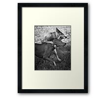 Dogs with game face on .31 Framed Print