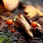 Little Life In The Forest by Debbie Oppermann