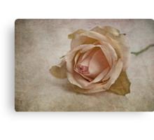 la vie en rose II Canvas Print