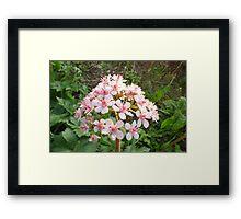 Umbrella Plant Framed Print