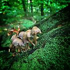 Fungi by Dave Liddle