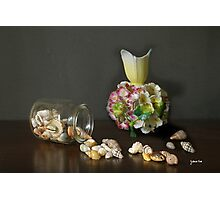 Aussie Shells & Antique Porcelain Photographic Print
