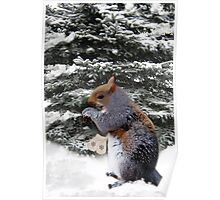 (✿◠‿◠) (◡‿◡✿)  Brrr ITS COLD DO U HAVE SOME MITTENS?? (A SQUIRREL AND HIS MITTENS)(✿◠‿◠) (◡‿◡✿) Poster