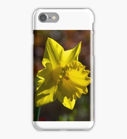 Daffodil at Gazebo Leith Park 20140830 0422  iPhone Case/Skin