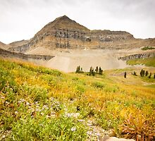 The last wildflowers at Mount Timpanogos by Spencer Dickson