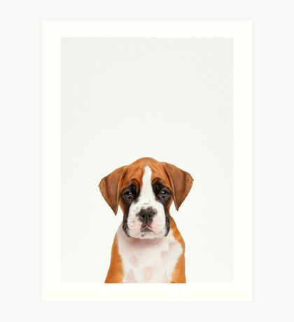 German boxer puppy dog in color Art Print