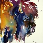Colorado Buffalo by twopoots