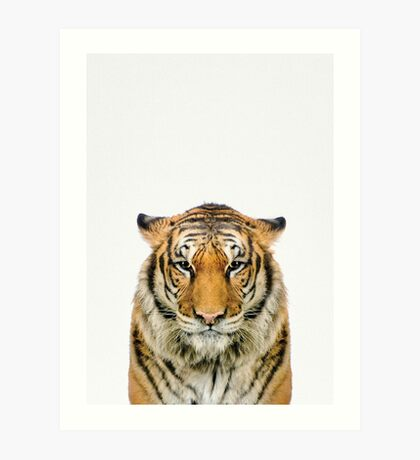 African Tiger in color Art Print
