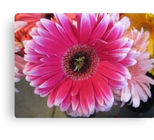 Just Another Pink White Tipped Flower Canvas Print